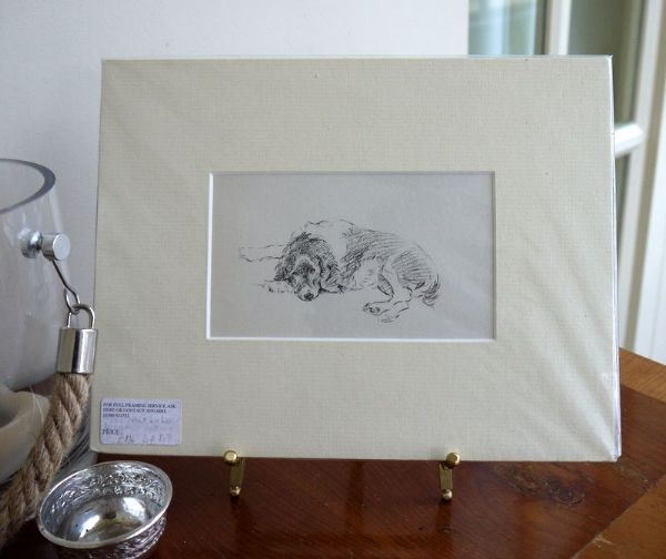 Springer Spaniel - lying with head to left  1930's print by Lucy Dawson